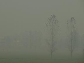 smog-trees.jpg