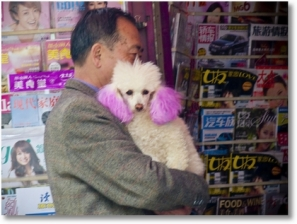 Pink Dog Ears